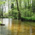 Boswandelingen: waarmee rekening houden?